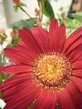 αaward、花
