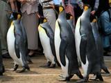 たたずむペンギンin長崎