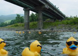river-duck