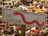 箱根、ヘビに注意