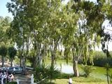 バレンシアの河辺の林。