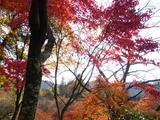 紅葉って日に透けるといっそう美しいですね。