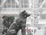 渋谷ハチ公雪景色