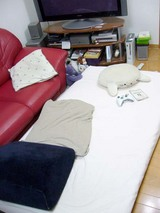 living bed