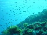 海・空飛ぶような魚たち